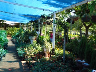 Vivero el botanico gu as paraguay for Vivero el botanico
