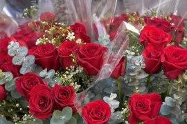 rosas11_01