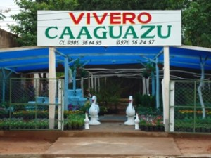 vivero_caaguazu (6)
